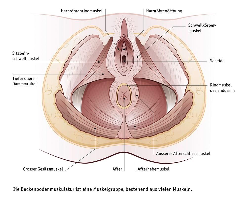 Hinten schwangerschaft geneigt nach gebärmutter Rückwärtsneigung der